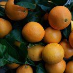 buy organic oranges